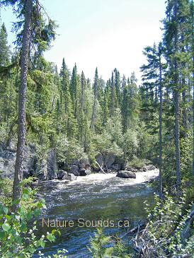 The Kopka River in the Boreal Forest